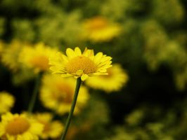 All Yellow by Xercatos