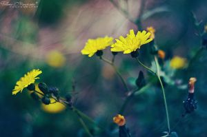 Spring is coming II by LoMiTa