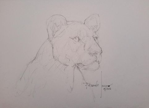 Gesture Drawing - Lioness by fernandoissamo