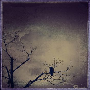 crow by little--baby-nothing