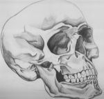 Another skull.... by dcaldwell1275
