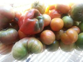 Tomatoes and a Bell Pepper by SirGunky