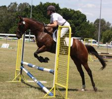 STOCK Showjumping 427 by aussiegal7