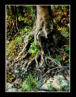 Roots by TimLaSure