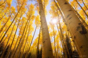 Land of Gold by PeterJCoskun