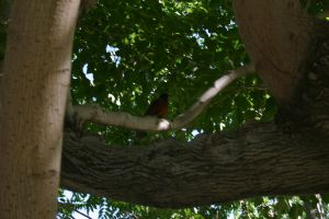 bird by the tree by pablour026