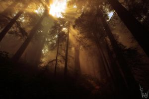 Forest by witam