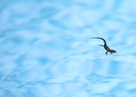 lizard with clouds by KariLiimatainen