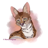 Serval by MarryGorgeous