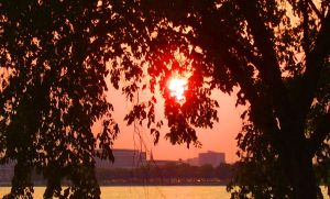 Trees Ablaze by Pentacle5