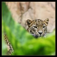 leopard 15 by Globaludodesign