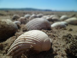 Seashells by CaprihinaGirl