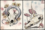 Skull Collection by ashkey