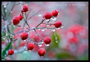 Drenched by acutely