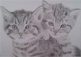 Kittens drawing by megh95