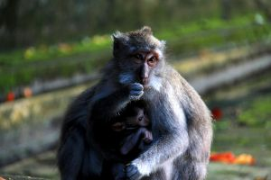 MOTHER AND SON, BALI by TANKQ77