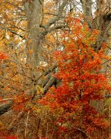 Shades of Autumn 2015, 3 by MadGardens