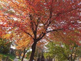 Fall is just around the corner by scr3aam3r