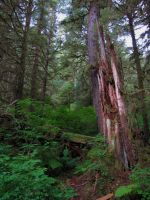 Tongass National Forest 5 by ShadowsStocks