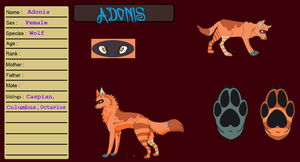 Adonis Ref by Sterling-Adopts