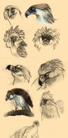 Sketches - Philippine Eagle by Autlaw