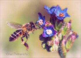 Summer Bee @ Pepes beach by GJ-Vernon