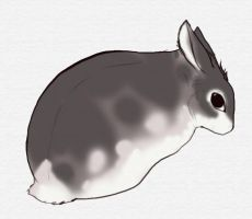 The Little Grey Rabbit by dyb
