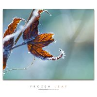 Frozen Leaf by Stridsberg