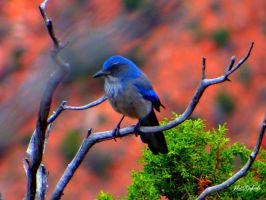 Grand Canyons ..........bird. by gintautegitte69