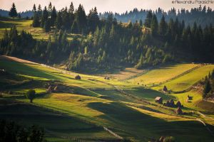 Green Paradise by AlecsPS