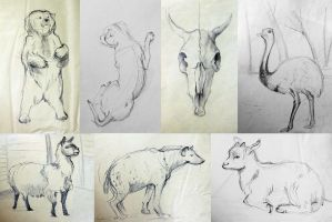 sketches of animals2 by TinaGrey