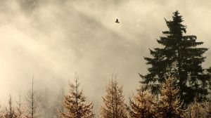 25.10.2012: Raven and Light by Suensyan