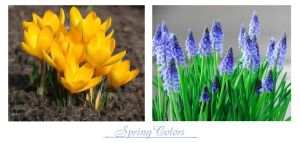 Spring Colors by Buble