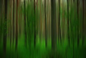 Belorussian_forest by Theressa