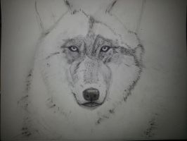 Wolf in progress 2 by VanishedReality