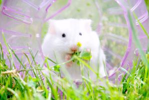 Hamster. by emshh