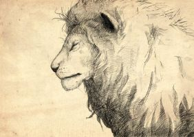 Sketch #58 Lion by creatureart