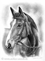 Hannoveraner Mare by AtelierArends