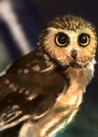 Daily Doodle #5 - Fluffy Owl by revois