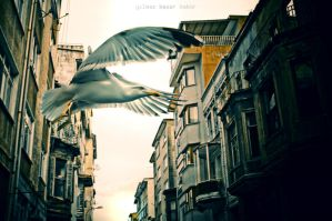 wings of city... by basharbbr