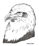 Bald Eagle Inked by MrMinos