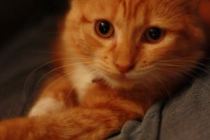 our cat by bhall96992