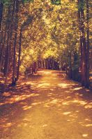 Pathway by KippoKip