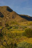 South Mountain with Tree by PatGoltz