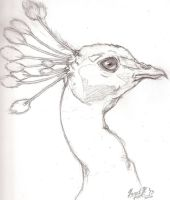 Unfinished Peacock by Wolfbeauty