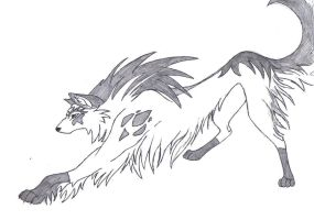 Old Wolf Drawing by Light123456
