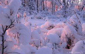 ALPINGLOW LIGHTS THE SNOW by 1arcticfox