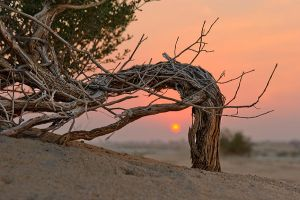 Tree from the desert by amai911