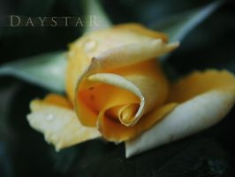 Sectio aurea by Daystar-Art