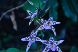 CBG 2012 Orchid Show 8 by AmberPalette